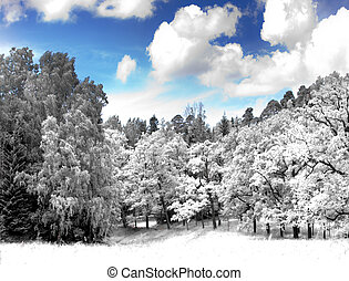 glade in the  wood, infrared photo