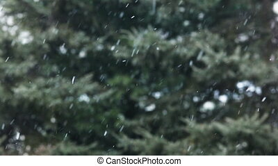 Snow / snowflakes - Fluffy snowflakes falling