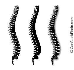 spine - simplified illustration of a spine from the side