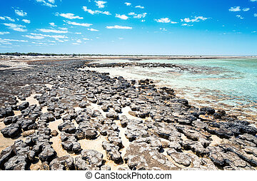 Stromatolites Australia - An image of the Stromatolites in...