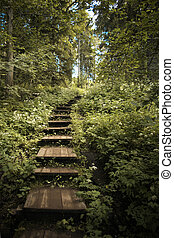 Island Valaam. A step on a path in the forest - Island...