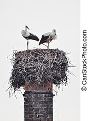 Spreewald Storks in  a nest on old chimney