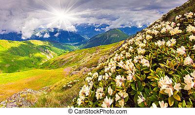 Kaukasus,  Mountains, Ängar, alpin