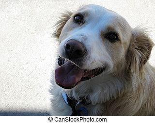 Pet dog - happy to see you