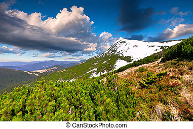 Beautiful spring landscape in the mountains