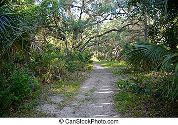Nature path - looking down a partially overgrown nature path...