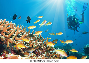Underwater landscape with small fishes and diver. Borneo