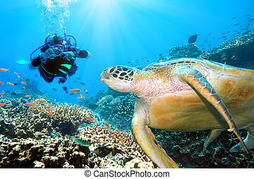 Green turtle underwater and diver Sipadan Celebes sea