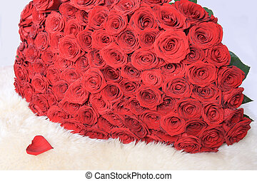red roses - set of red roses on white fur