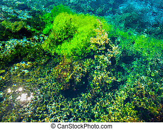 Abstract Background of Submersed Water Plants at Famous Pupu...