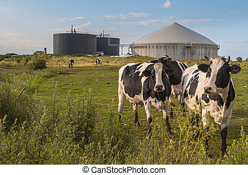 Biogas plant with Cows - Bio Gas Installation Processing Cow...