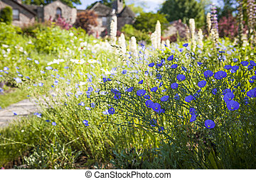 Flax flowers in summer garden - Blue flax flowers blooming...