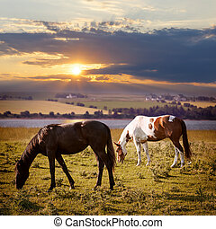 Horses grazing at sunset - Horses grazing in a rural pasture...