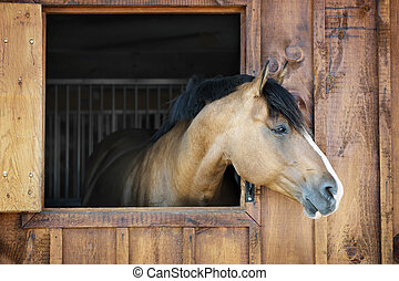 Horse in stable - Curious brown horse looking out stable...