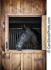 Horse in stable - Profile of black horse looking out stable...