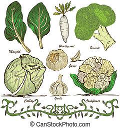 hand drawn vegetable set 1