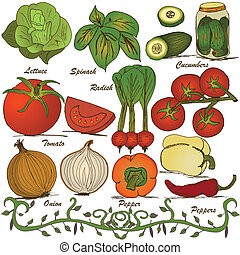 hand drawn vegetable set 3