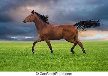 Horse trott on a green grass - Dressage horse trotting on a...