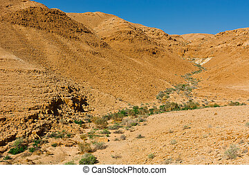 Riverbed - Dry Riverbed in the Negev Desert