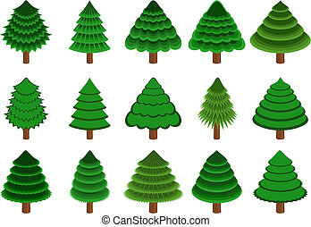 conifers - set of 15 different vector conifers on white...