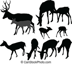doe and fawn vector