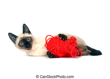 Kitten with red yarn - A Siamese kitten playing with a ball...