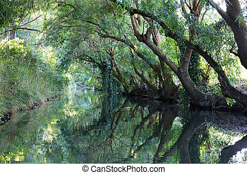 Ciane Nature Reserve Syracuse Italy - Ciane Nature Reserve...