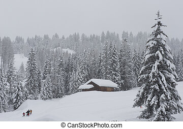 Chalet in Val di Fassa - Chalet and trees under the snow in...