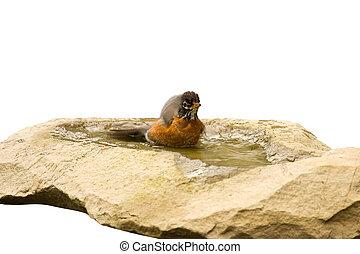 robin relaxes in a garden bath