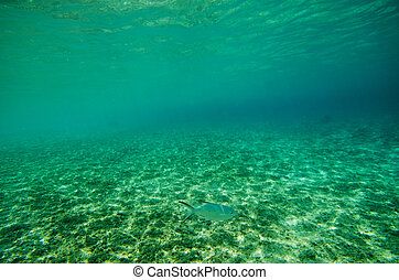 Underwater View of YOSHINO Coast, Okinawa Prefecture/Japan,...