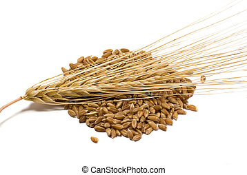 Barley grains and ear isolated on the white background
