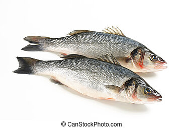 Two fresh sea bass fish on white background
