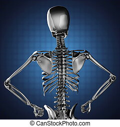 human skeleton model on blue background