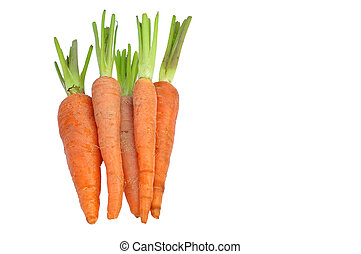 Baby carrot - The immature roots of the carrot plant on...