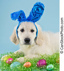 小狗, 復活節