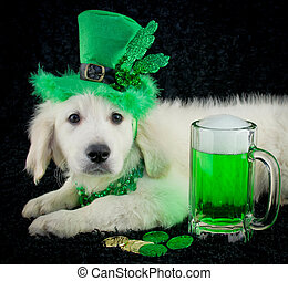 St Patricks Day Puppy - A cute puppy all ready for St...