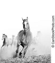 wild horse in dust