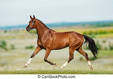 dressage horse in field