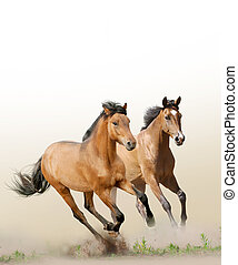 chevaux, poussière