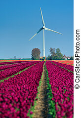 tulips and wind turbine in the Netherlands
