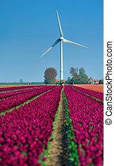 tulipanes, viento, turbina