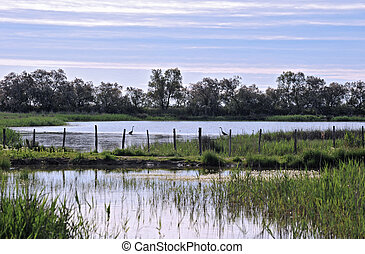 wetlands  - wetland with two herons in the morning