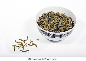 Bowl of mealworms - A bowl of dried mealworms
