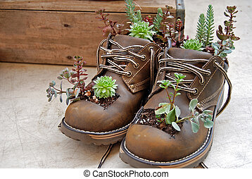 Boot Planter - Plants growing in a pair of old boots