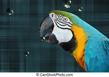 Catching Bubbles - Parrot with a bubble in its beak.