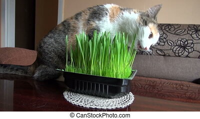 domestic cat eating fresh grass
