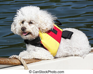 Boating Buddy - Poodle wearing a life vest on a boat.