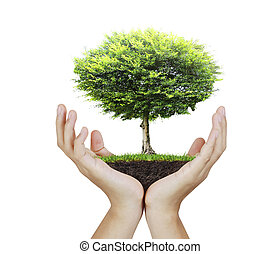 pequeno, árvore, mão