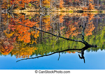 Branch Protrudes from Autumn Lake