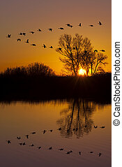 Wild Geese on an Orange Sunset - Reflection of Canadian...